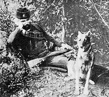 Командант Коста Пећанац