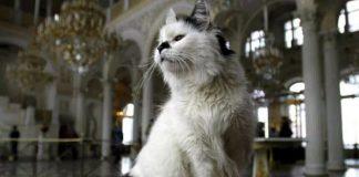 мачке у ермитажу