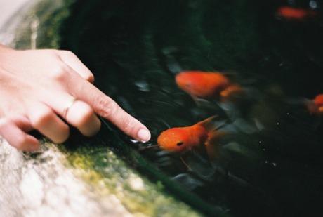 Златна рибица