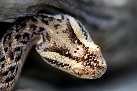 Змија