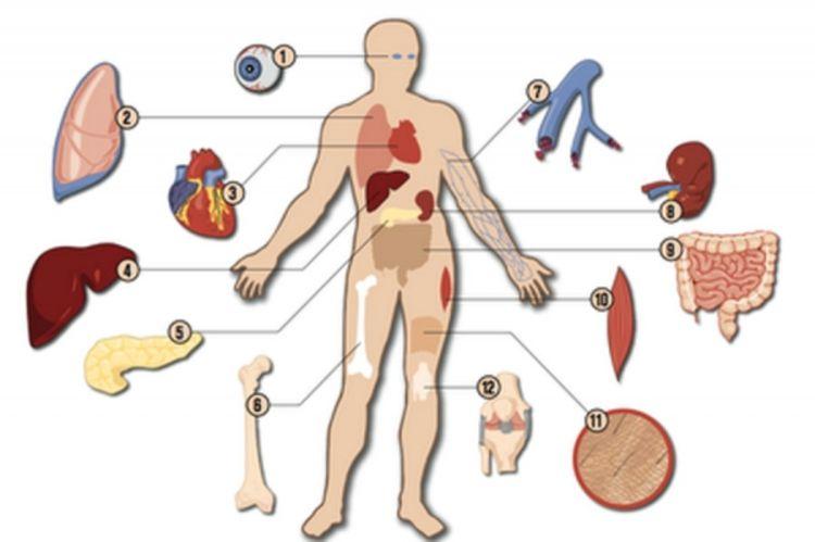 нови закон о трансплантацији