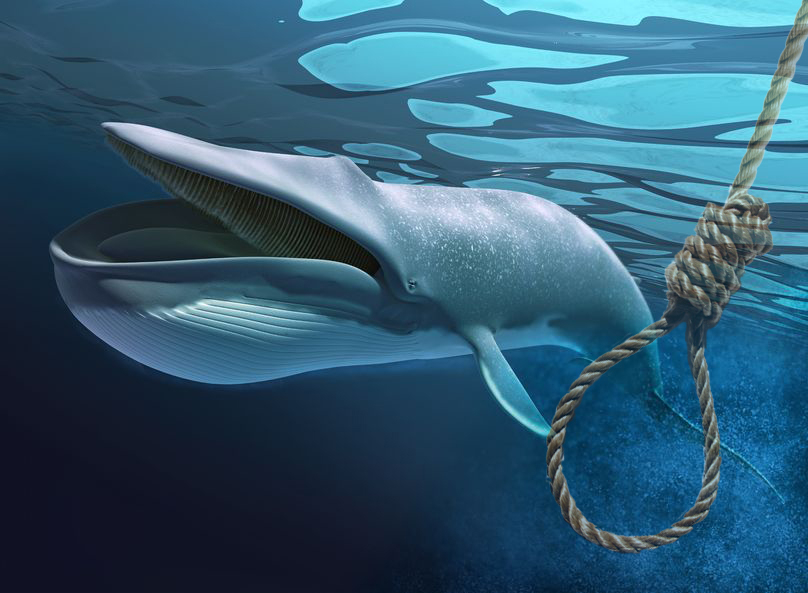 плави кит
