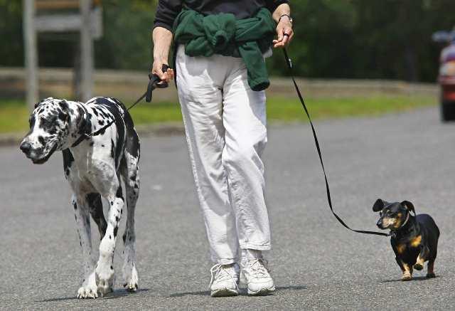 шетате ли пса