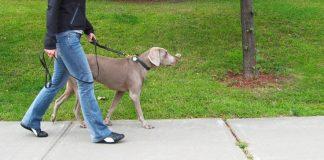 шетање паса