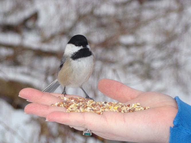 птице