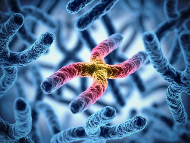 y хромозом