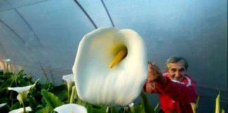 цвеће