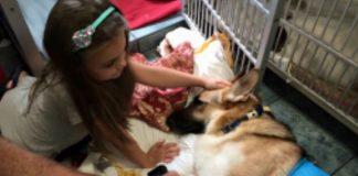 пас спасавао живот