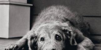 стари пси