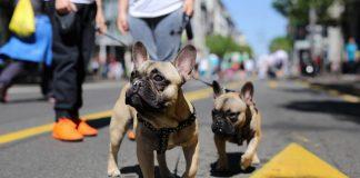 шетач паса