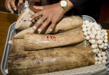 нелегална трговина слоновачом