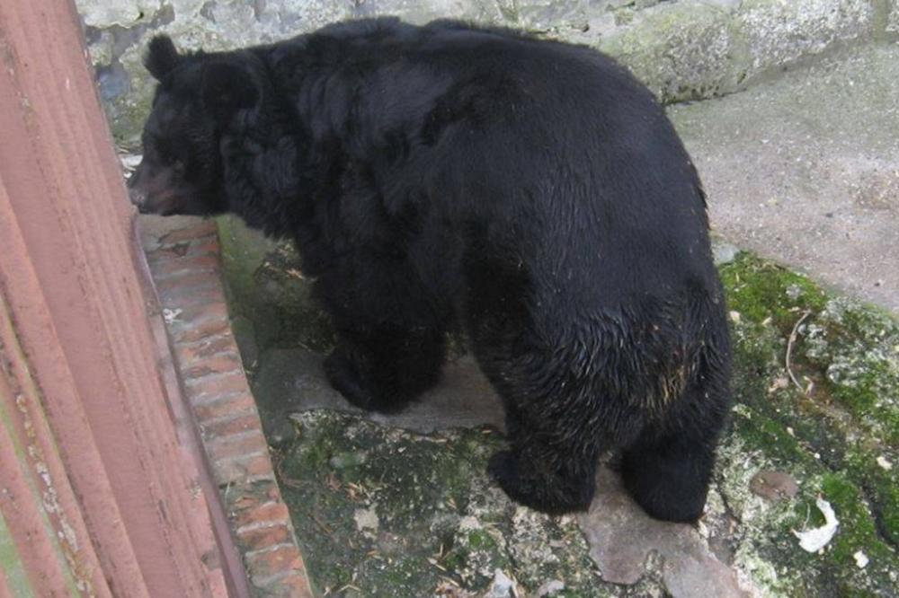 медвед миша