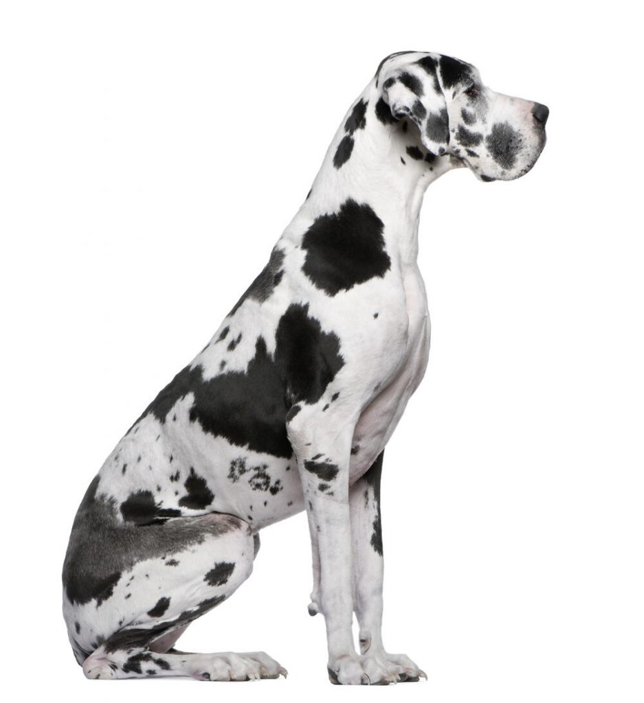 расе паса