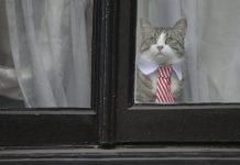 мачак кастро