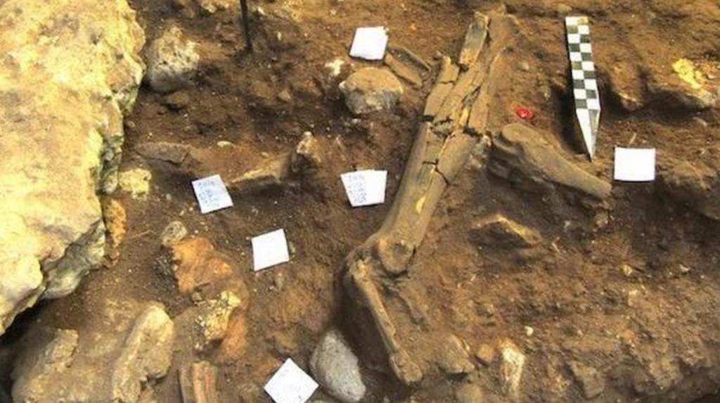 налаз присуства неандерталаца