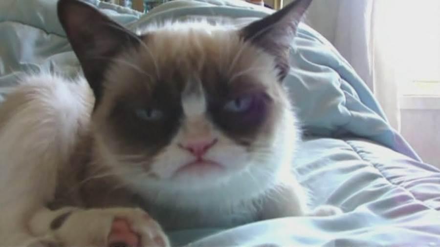 мачка грампи