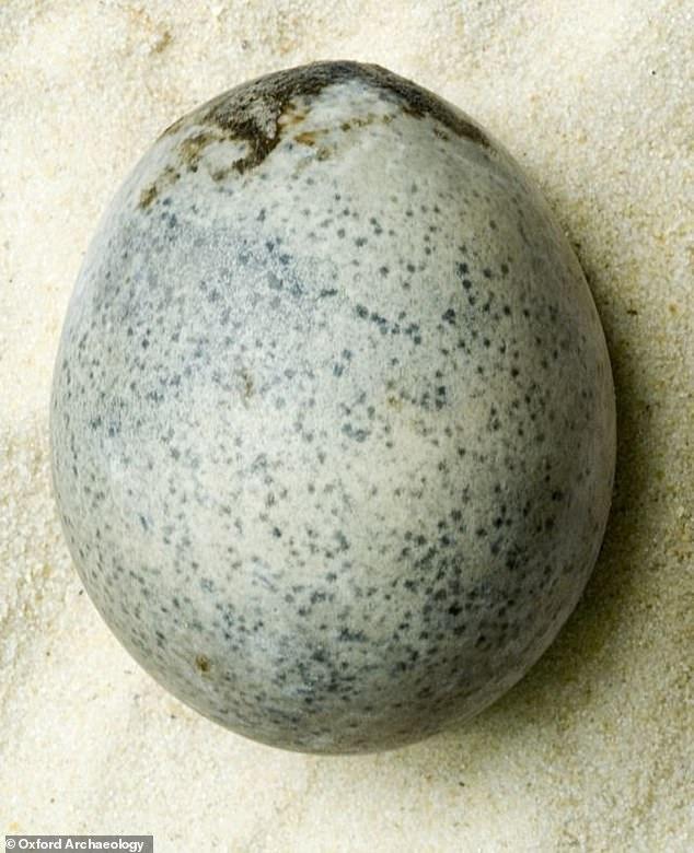 1700 јаја