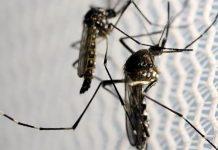комарци