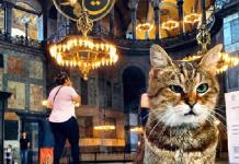 мачка гли