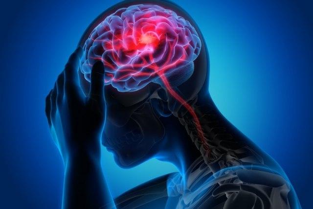 развој мозга